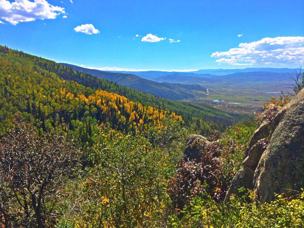 A Bright Yellow patch of Aspens